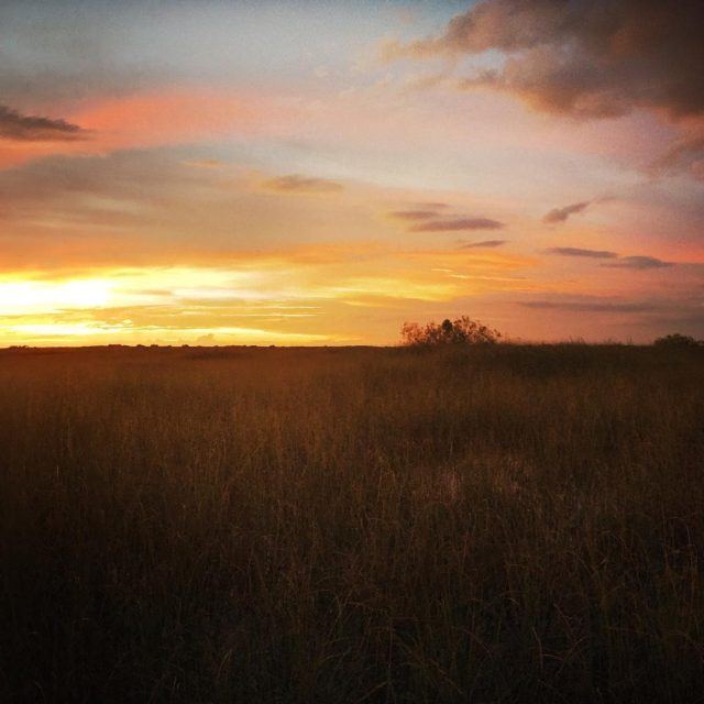 Sunset in the Everglades among the bullfrogs herons alligators andhellip