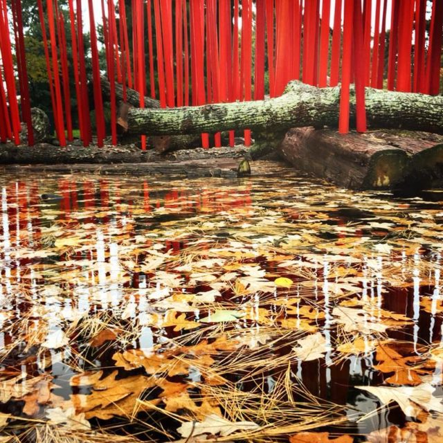 Rainy fall day with Chihuly at nybg