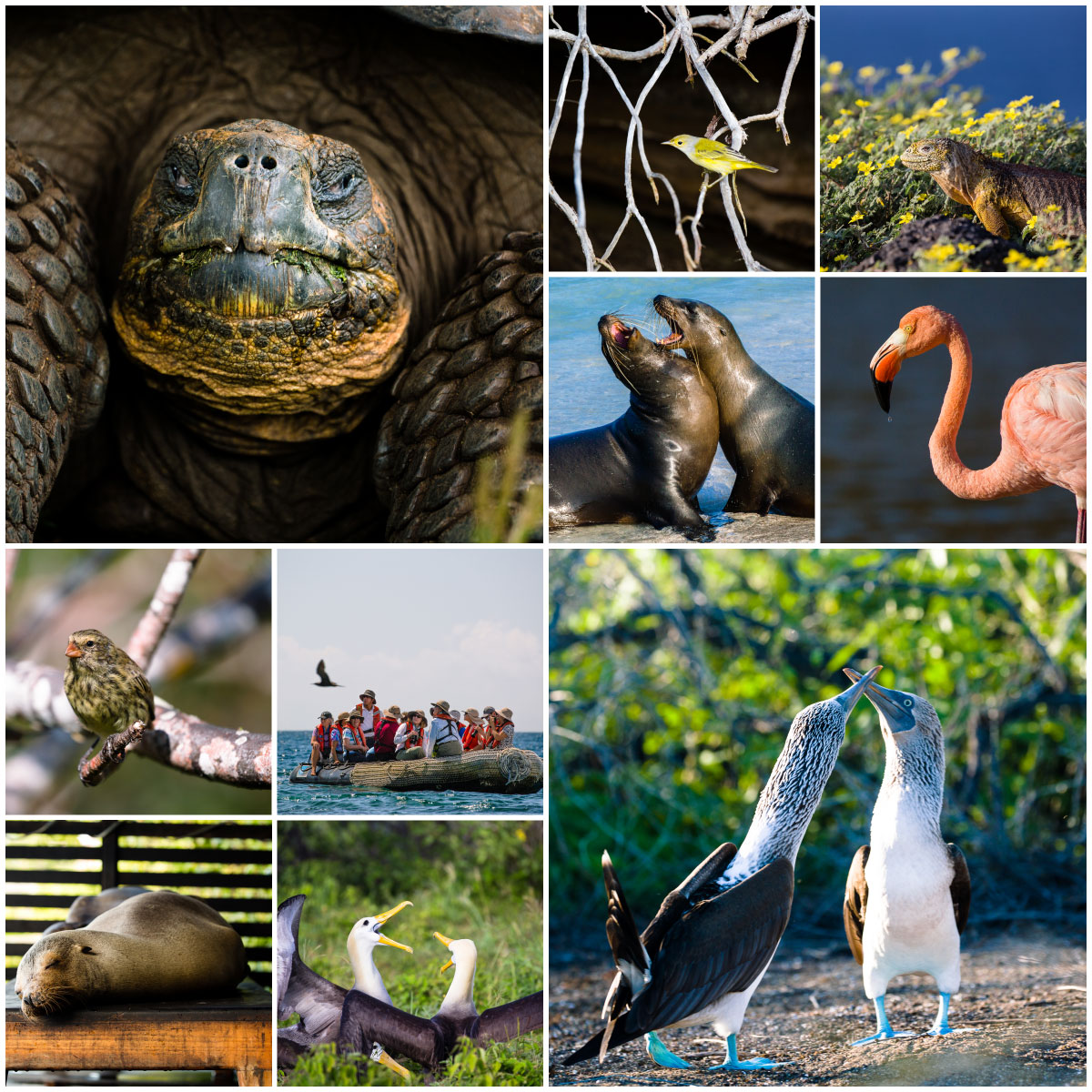 Images of galapagos wildlife including tortoise, flamingo, and blue-footed boobies