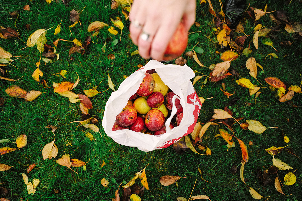 Person collecting apples in a bag